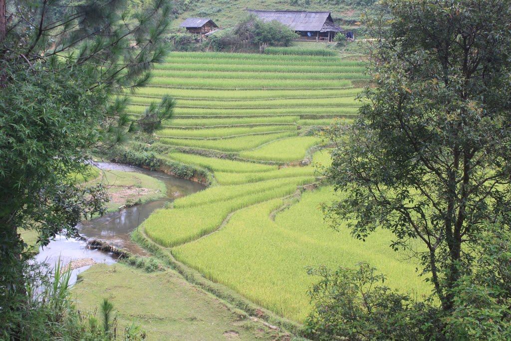 Tour Mù Cang Chải - Ngọc Chiến - Sapa mùa lúa chín (3N2Đ)
