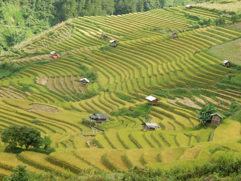 Tour Ha noi – Mu cang chai – sapa 4 days 3 nights