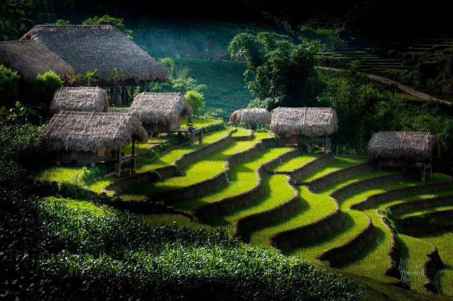 Eco Palms House - Bản Lao Chải - TT. Sapa